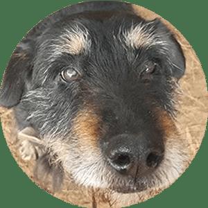 Pies Klara