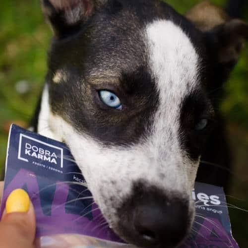 Pies z karmą Dobra Karma 4
